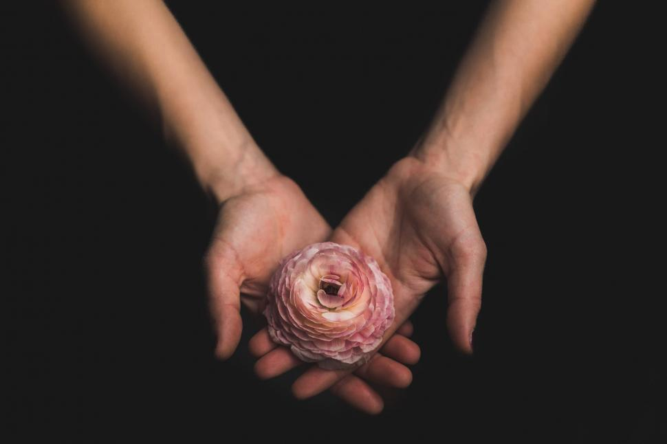 Download Free Stock Photo of Woman Holding Flower