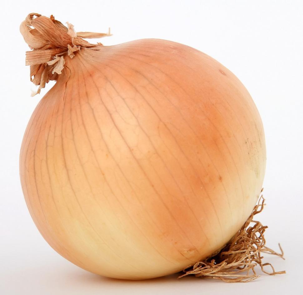 Download Free Stock Photo of bulb onion stalk food fresh
