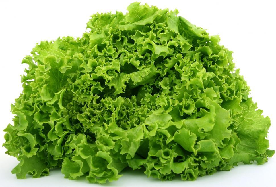 Download Free Stock Photo of lettuce vegetable broccoli cruciferous vegetable food leaf greens salad plant fresh healthy produce herb organic leaves garden vegetarian diet ingredient