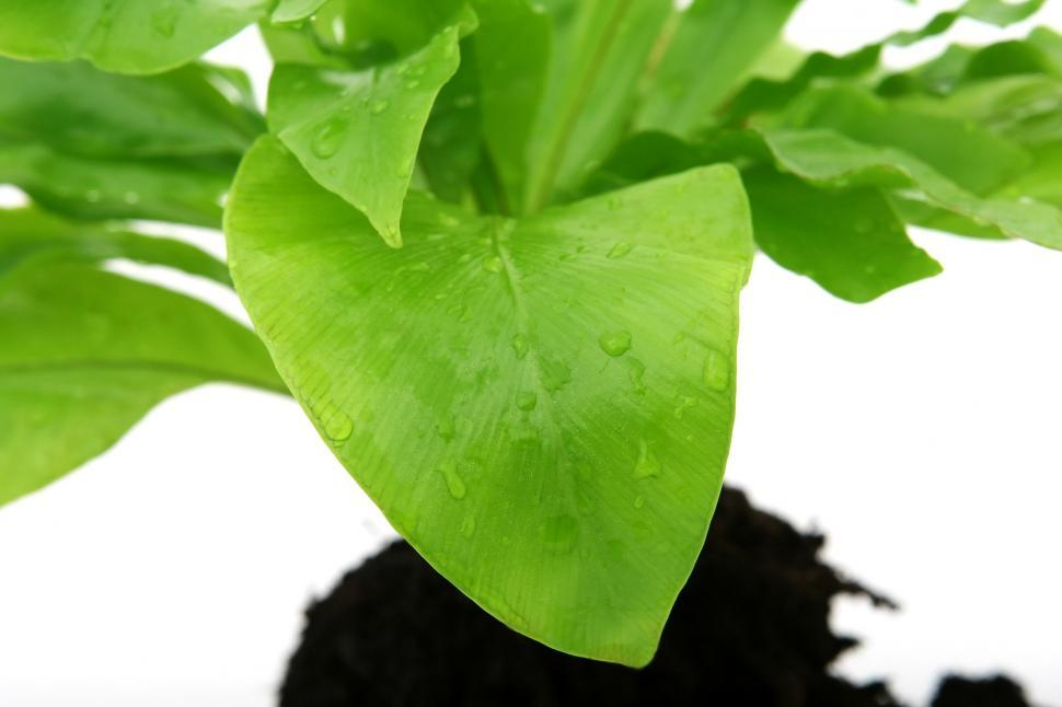 Download Free Stock Photo of lime food vegetable fruit fresh leaf plant healthy organic freshness produce basil
