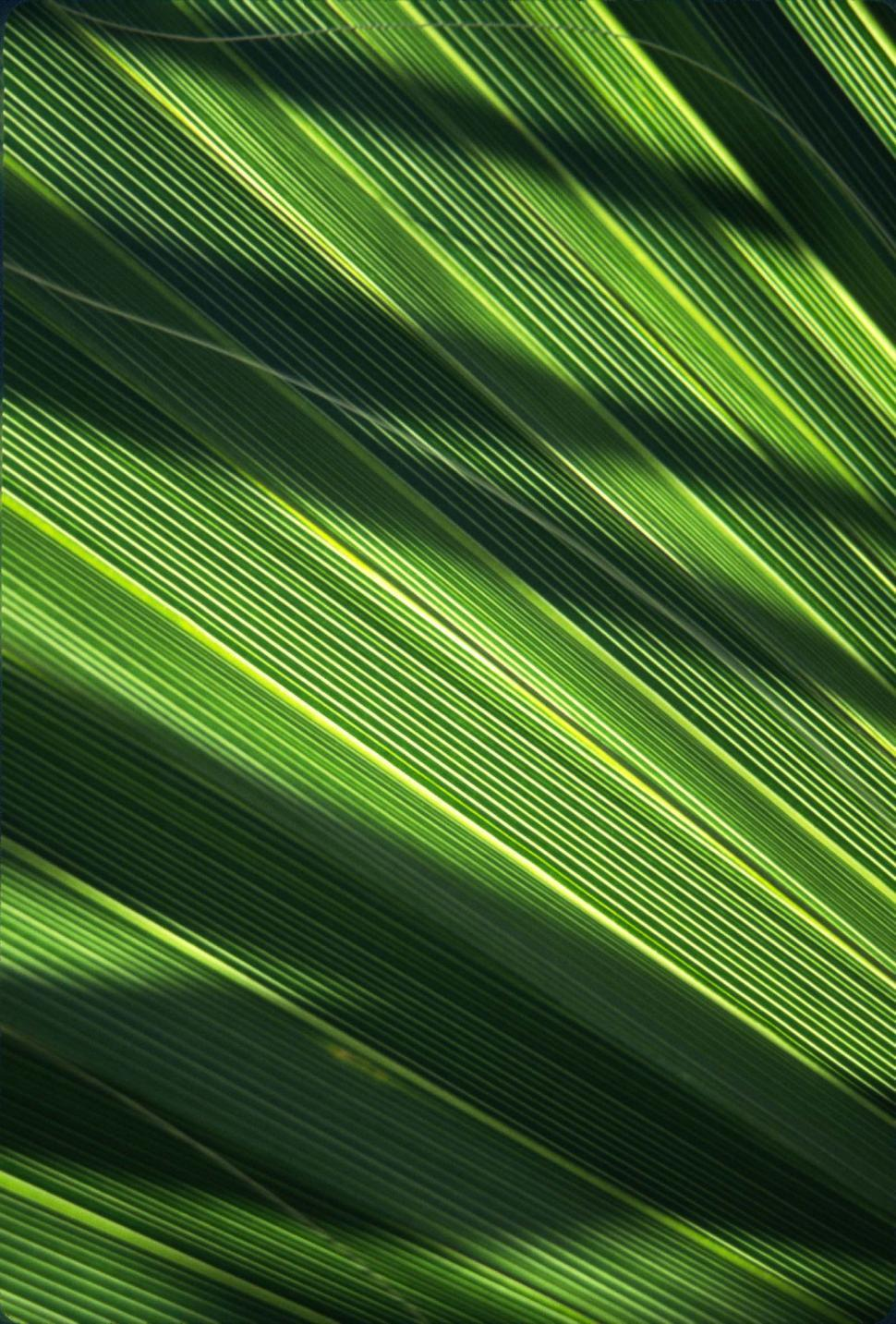 Download Free Stock HD Photo of Palm frond background Online
