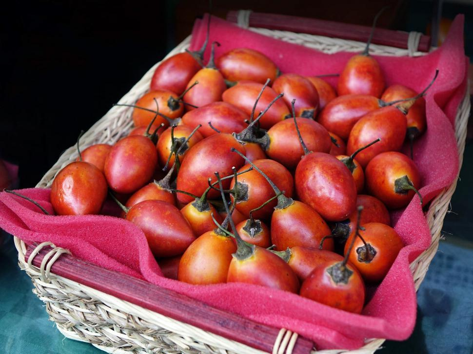 Download Free Stock HD Photo of Tree Tomato Online