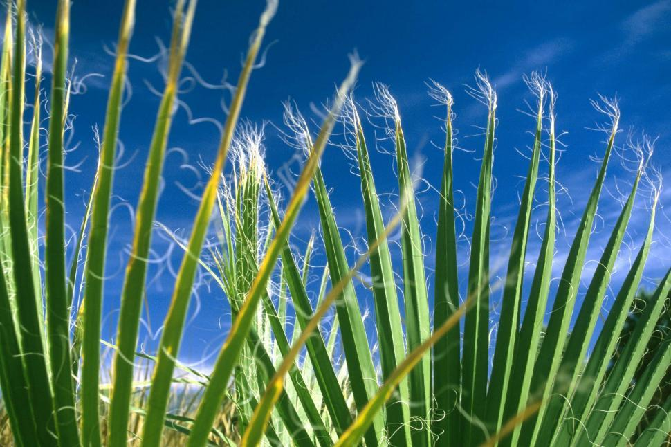 Download Free Stock HD Photo of Palm frond tips Online