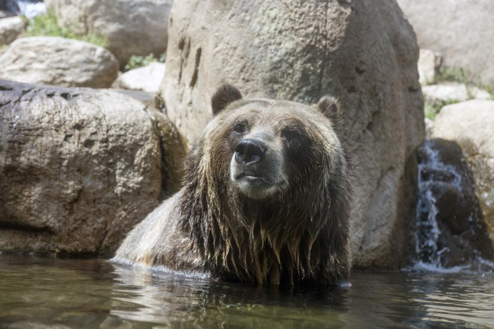 Download Free Stock Photo of brown bear bear three-toed sloth sloth mammal