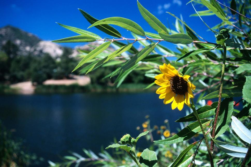 Download Free Stock Photo of lake granite basin prescott national forest water mountains sunflowers