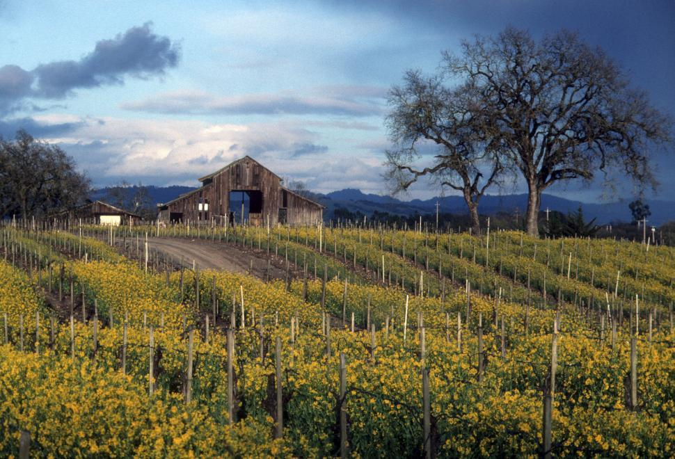 Download Free Stock Photo of old barn and vineyards 2