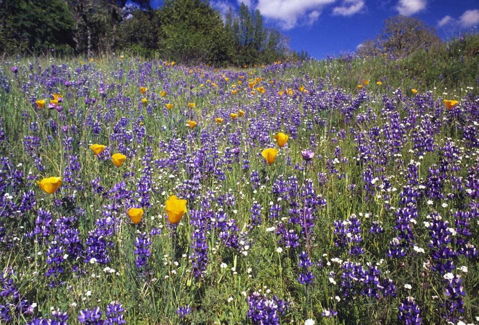 Download Free Stock HD Photo of field of spring wildflowers Online