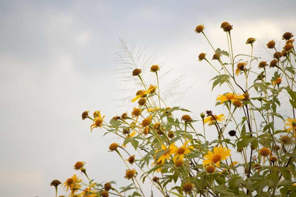 Download Free Stock HD Photo of Many yellow flowers Online