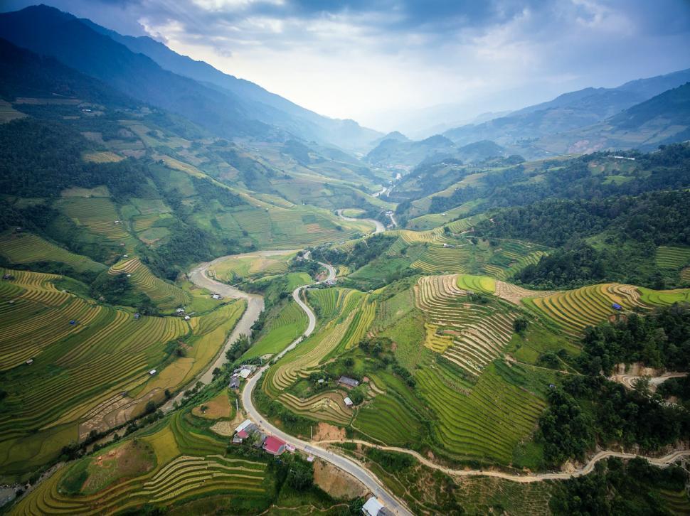 Download Free Stock Photo of Rice Plantation