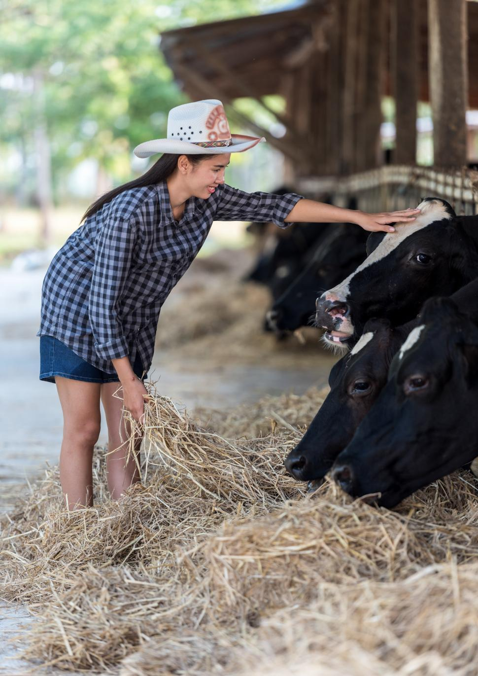 Download Free Stock HD Photo of Feeding the Cows Online