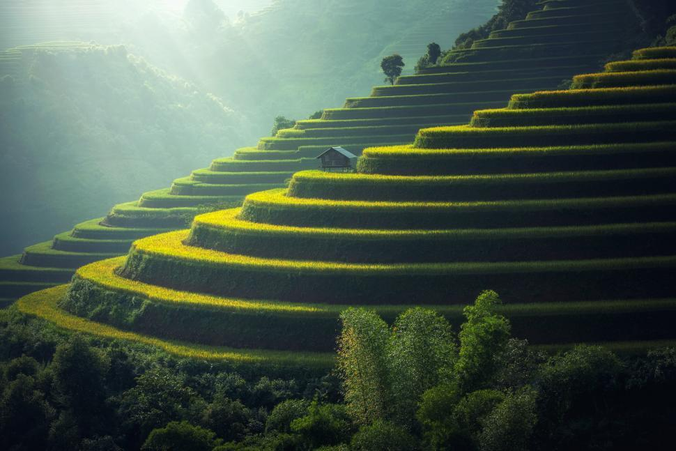 Download Free Stock HD Photo of Mountainous Rice Plantation Online