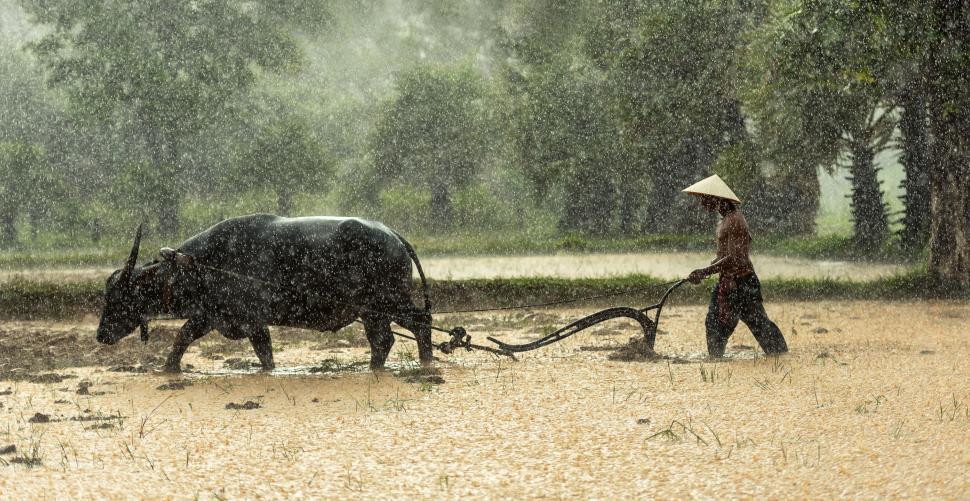 Download Free Stock Photo of Rainy Farm