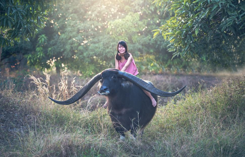 Download Free Stock HD Photo of Girl on the Buffalo Back Online
