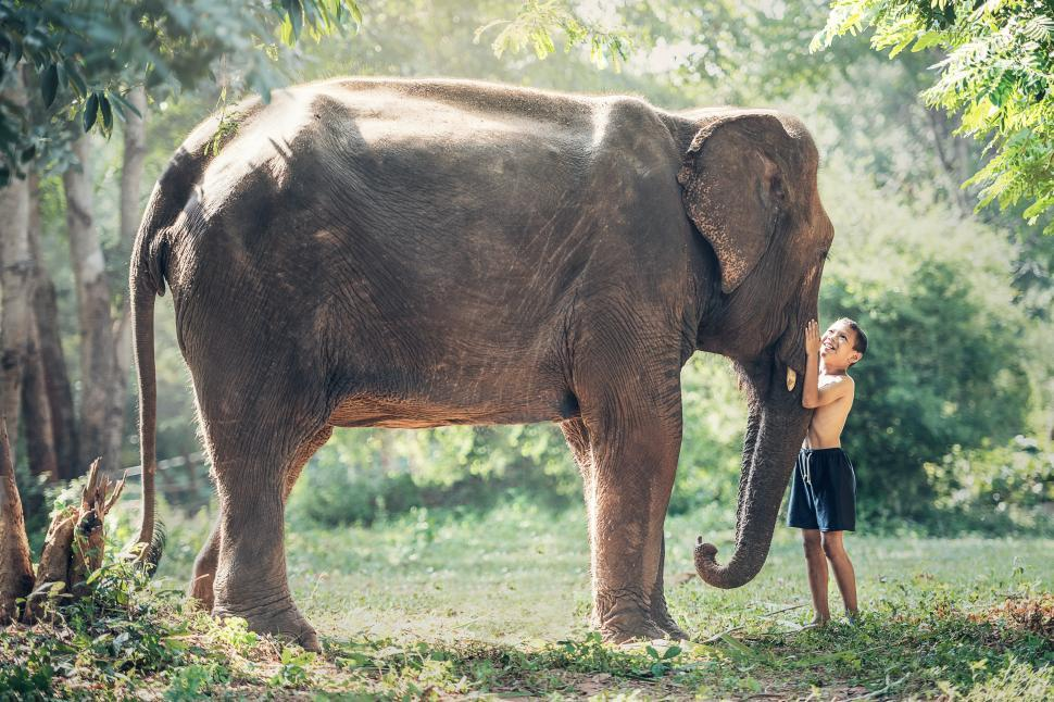 Download Free Stock Photo of Little Boy with Elephant