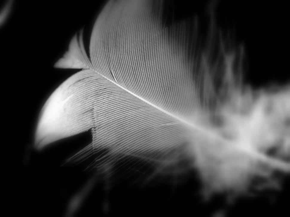 Download Free Stock HD Photo of losing a white feather Online