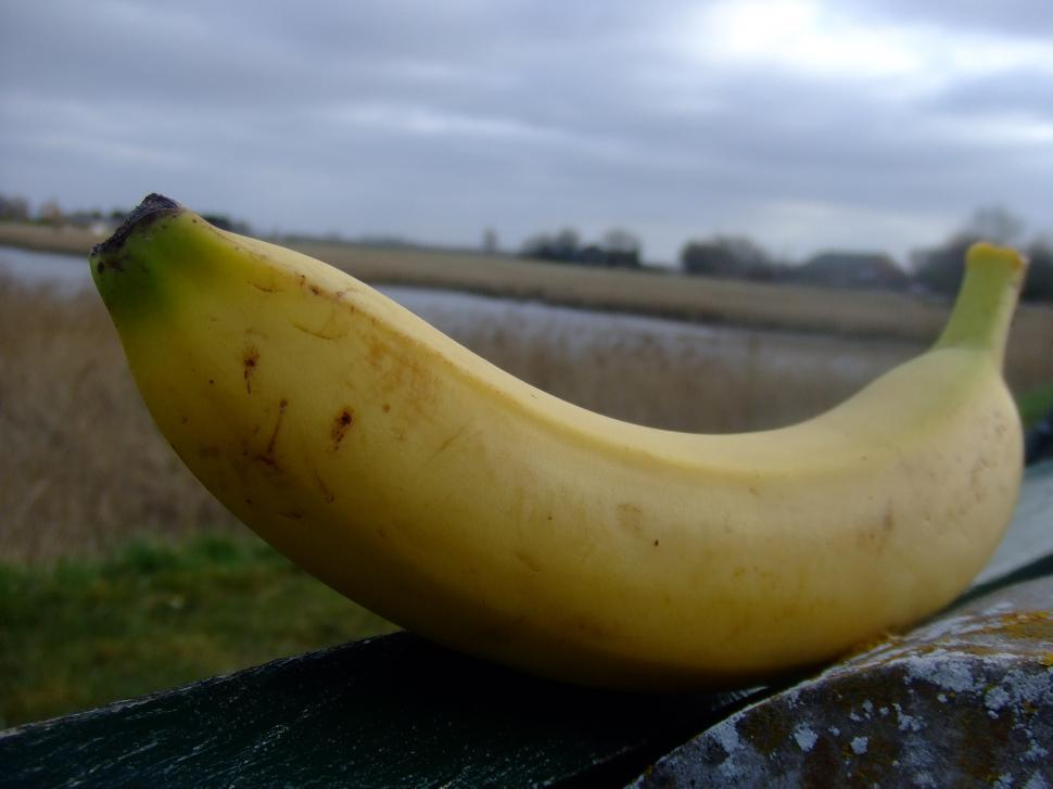 Download Free Stock Photo of the BIG banana
