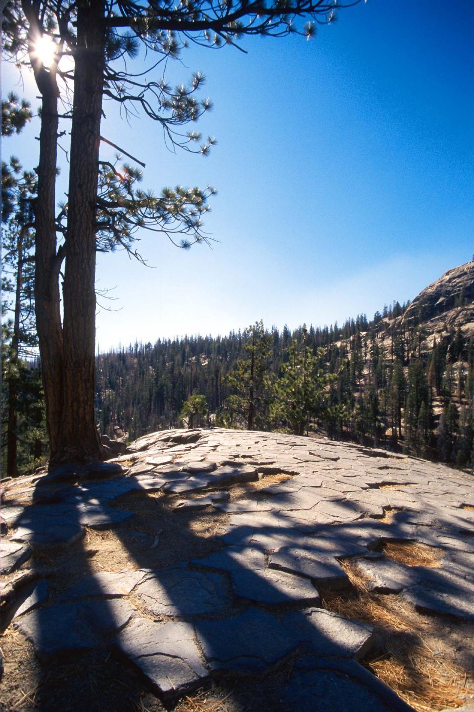 Download Free Stock Photo of pines trees mountains rocks devils postpile national monument columns basalt wilderness geological formation fractured cracks cracked