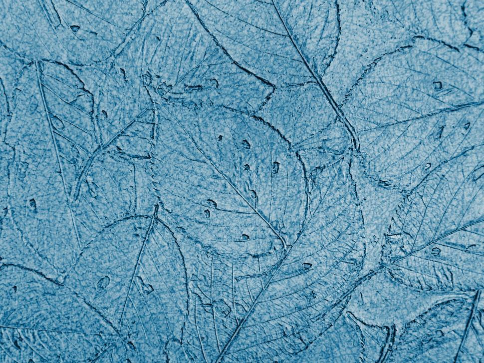 Download Free Stock Photo of Wall leaf texture