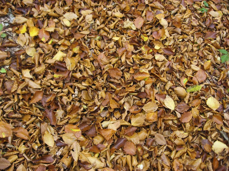 Download Free Stock HD Photo of fallen leaves Online